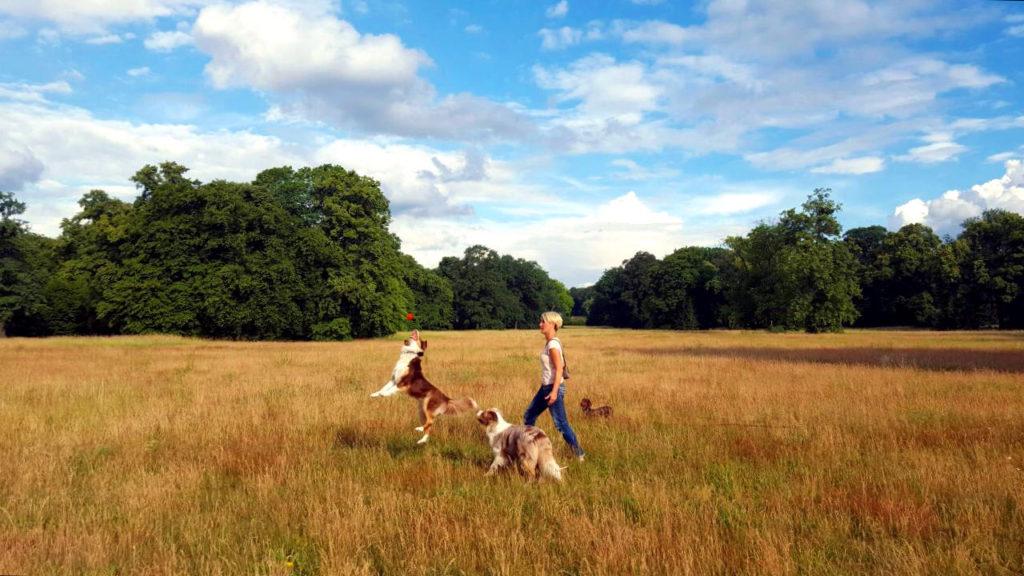 Hundesitter Potsdam